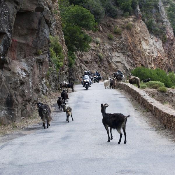 Hermosa Corsica y Sardegna